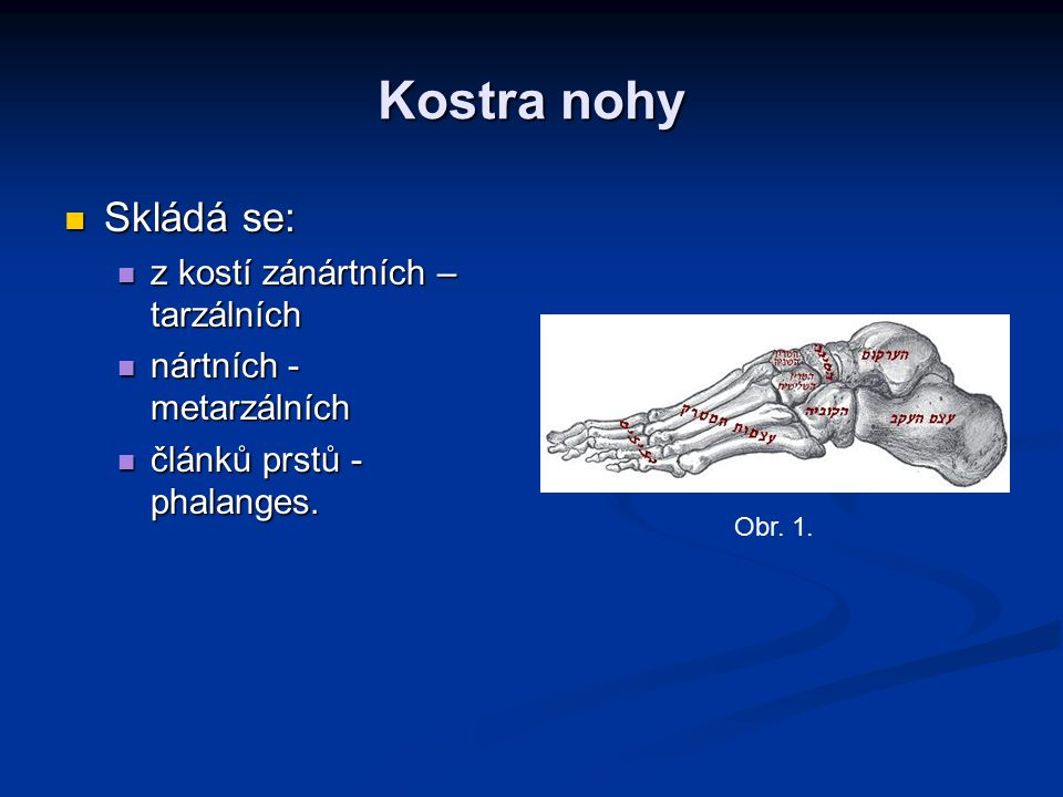 Skládá se: Skládá se: z kostí zánártních – tarzálních z kostí zánártních – tarzálních nártních - metarzálních nártních - metarzálních článků prstů - p
