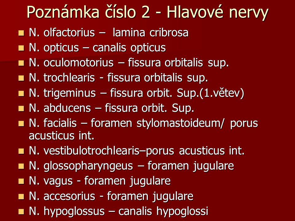 Poznámka číslo 2 - Hlavové nervy N. olfactorius – lamina cribrosa N. olfactorius – lamina cribrosa N. opticus – canalis opticus N. opticus – canalis o