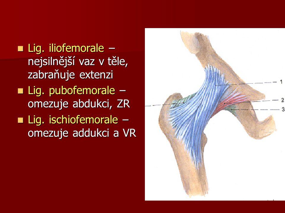 Lig. iliofemorale – nejsilnější vaz v těle, zabraňuje extenzi Lig. iliofemorale – nejsilnější vaz v těle, zabraňuje extenzi Lig. pubofemorale – omezuj