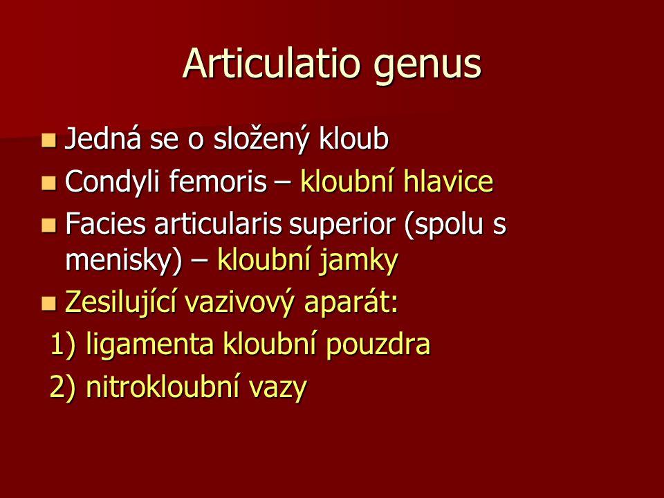 Articulatio genus Jedná se o složený kloub Jedná se o složený kloub Condyli femoris – kloubní hlavice Condyli femoris – kloubní hlavice Facies articul
