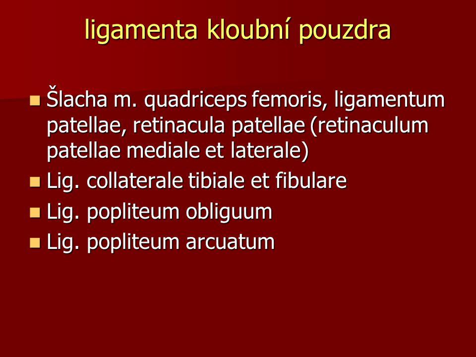 ligamenta kloubní pouzdra Šlacha m. quadriceps femoris, ligamentum patellae, retinacula patellae (retinaculum patellae mediale et laterale) Šlacha m.