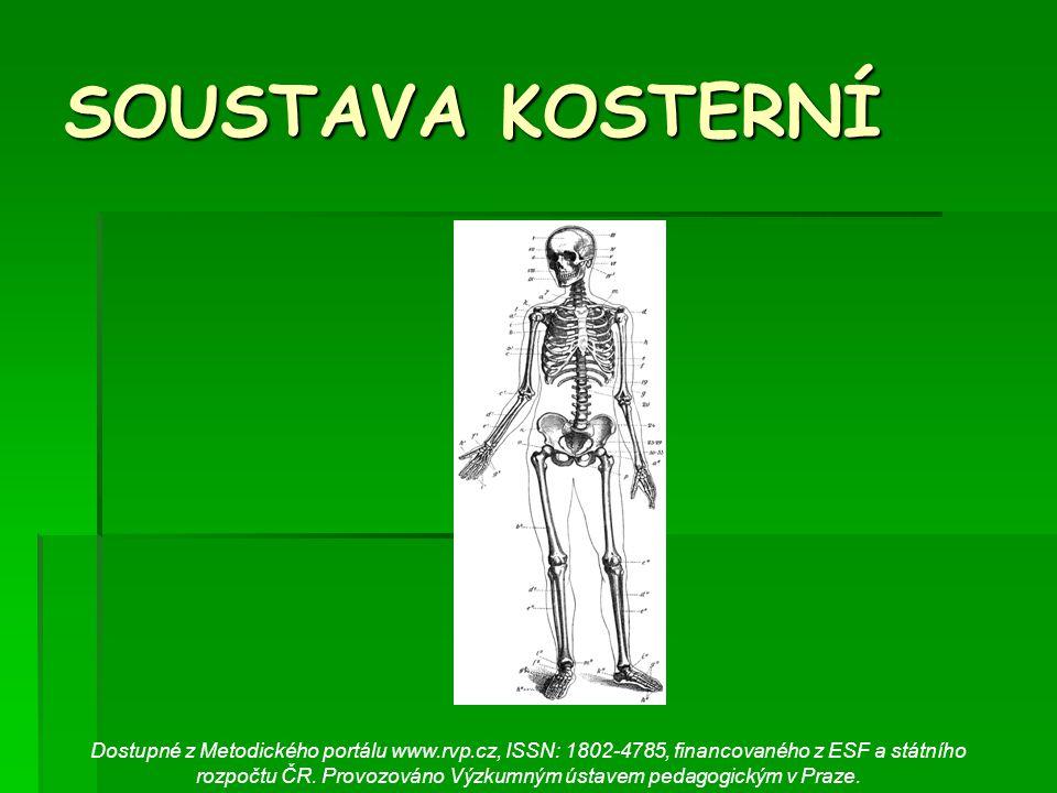 SOUSTAVA KOSTERNÍ Dostupné z Metodického portálu www.rvp.cz, ISSN: 1802-4785, financovaného z ESF a státního rozpočtu ČR. Provozováno Výzkumným ústave