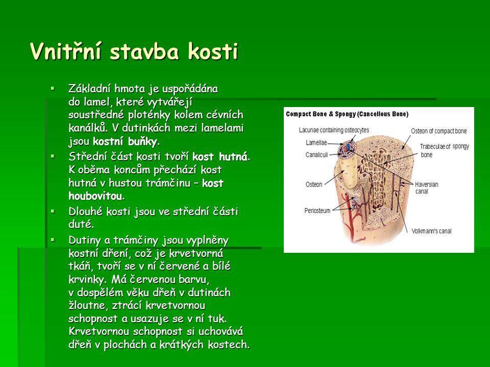 Vnitřní stavba kosti  Základní hmota je uspořádána do lamel, které vytvářejí soustředné ploténky kolem cévních kanálků. V dutinkách mezi lamelami jso