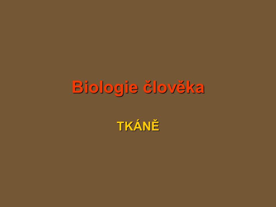 Biologie člověka TKÁNĚ
