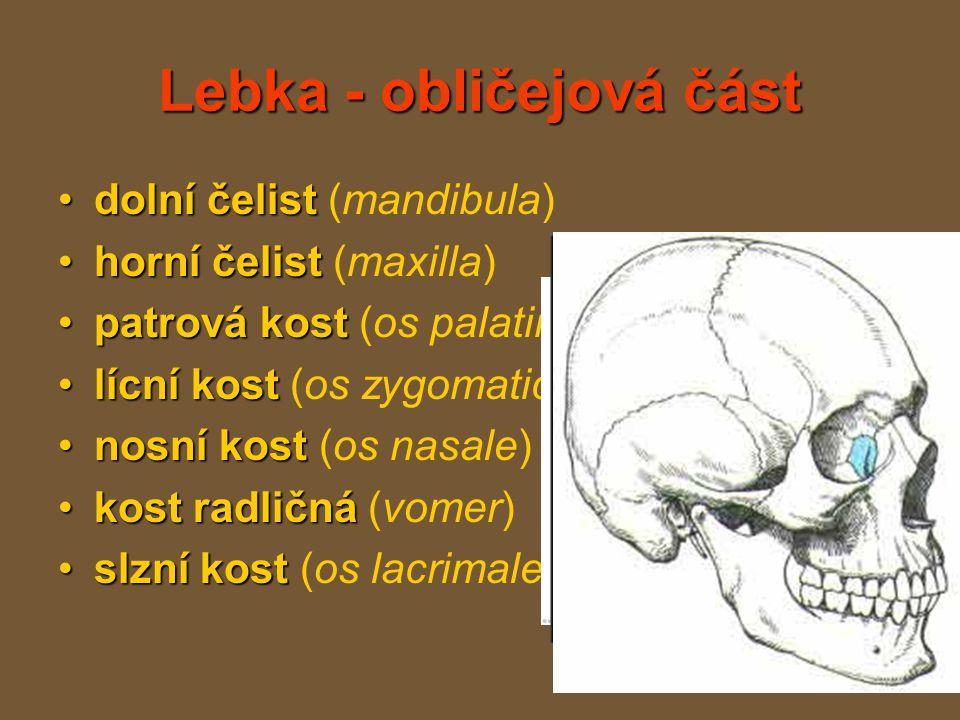 Lebka - obličejová část dolní čelistdolní čelist (mandibula) horní čelisthorní čelist (maxilla) patrová kostpatrová kost (os palatinum) lícní kostlícní kost (os zygomaticum) nosní kostnosní kost (os nasale) kost radličnákost radličná (vomer) slzní kostslzní kost (os lacrimale)