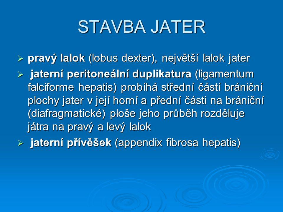 STAVBA JATER  pravý lalok (lobus dexter), největší lalok jater  jaterní peritoneální duplikatura (ligamentum falciforme hepatis) probíhá střední čás
