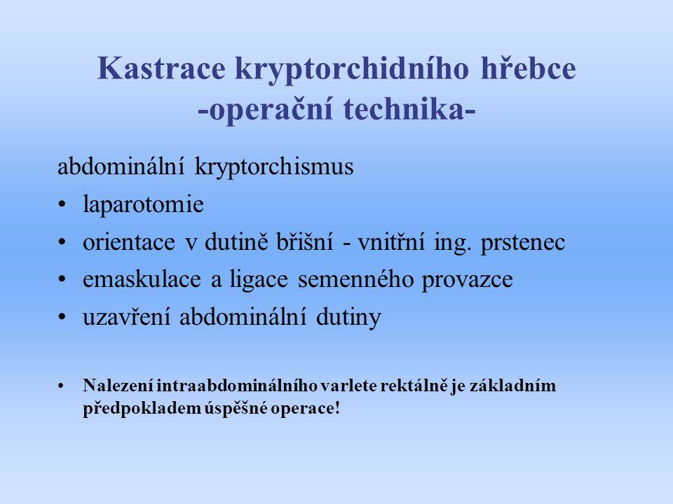 Kastrace kryptorchidního hřebce -operační technika- abdominální kryptorchismus laparotomie orientace v dutině břišní - vnitřní ing. prstenec emaskulac