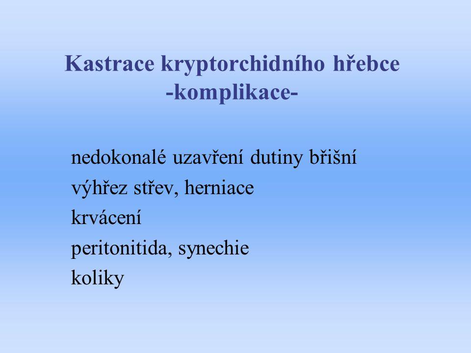 Kastrace kryptorchidního hřebce -komplikace- nedokonalé uzavření dutiny břišní výhřez střev, herniace krvácení peritonitida, synechie koliky