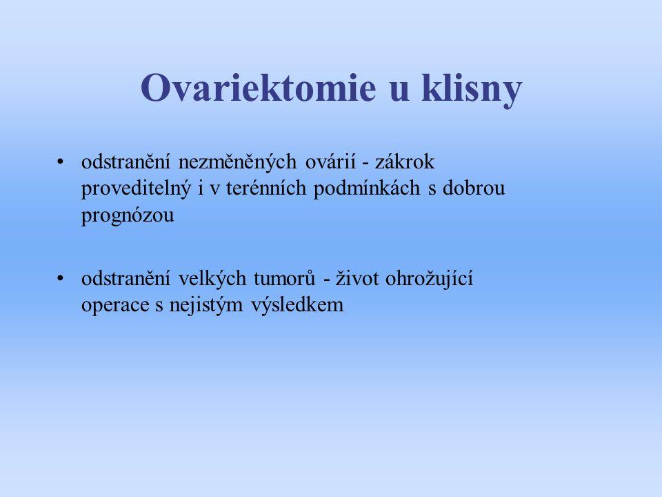 Ovariektomie u klisny odstranění nezměněných ovárií - zákrok proveditelný i v terénních podmínkách s dobrou prognózou odstranění velkých tumorů - živo