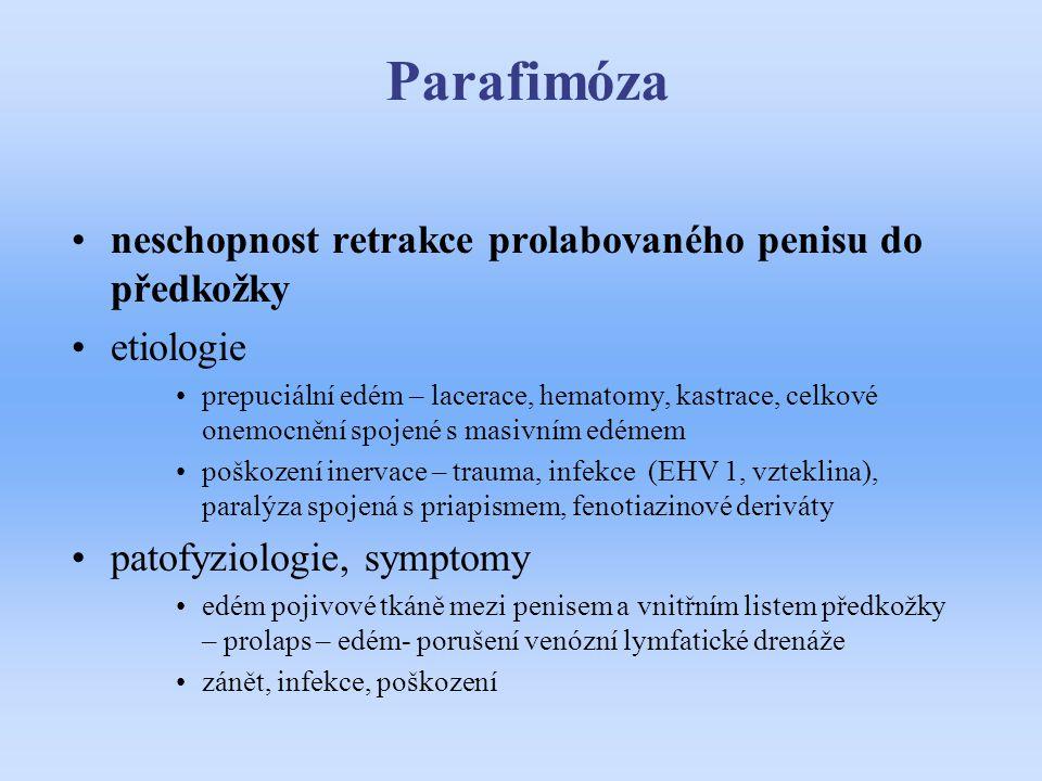 Parafimóza neschopnost retrakce prolabovaného penisu do předkožky etiologie prepuciální edém – lacerace, hematomy, kastrace, celkové onemocnění spojen