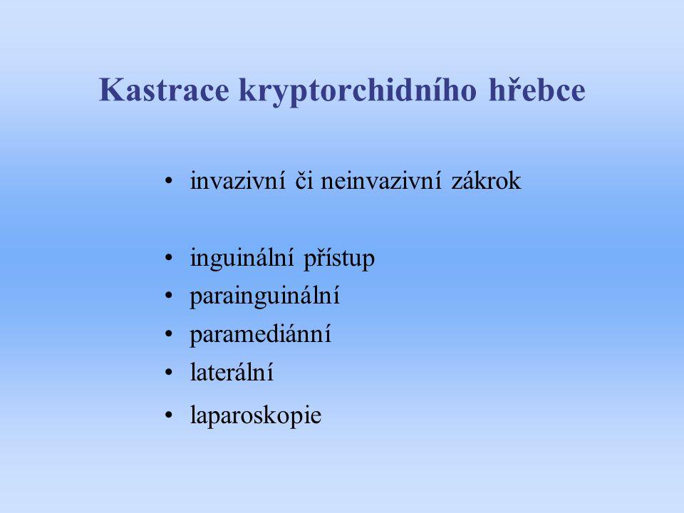 Kastrace kryptorchidního hřebce invazivní či neinvazivní zákrok inguinální přístup parainguinální paramediánní laterální laparoskopie