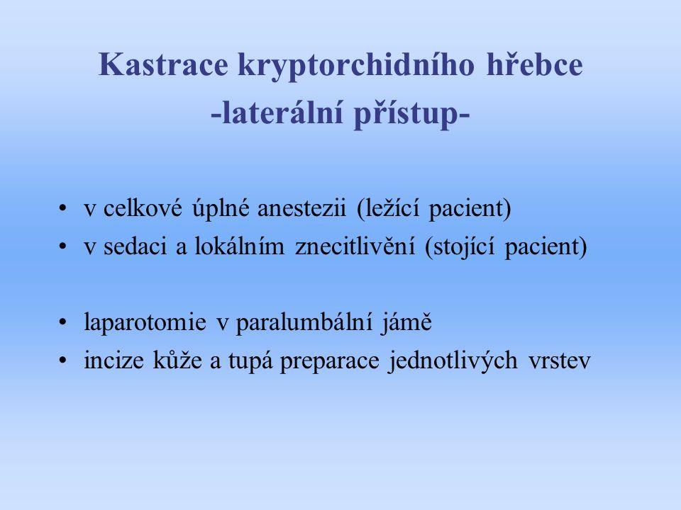 Kastrace kryptorchidního hřebce -laterální přístup- v celkové úplné anestezii (ležící pacient) v sedaci a lokálním znecitlivění (stojící pacient) lapa
