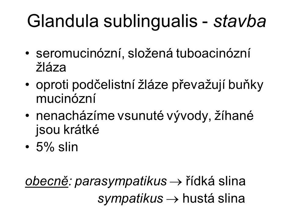 Glandula sublingualis - stavba seromucinózní, složená tuboacinózní žláza oproti podčelistní žláze převažují buňky mucinózní nenacházíme vsunuté vývody