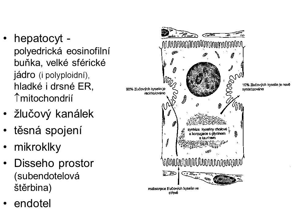 hepatocyt - polyedrická eosinofilní buňka, velké sférické jádro (i polyploidní), hladké i drsné ER,  mitochondrií žlučový kanálek těsná spojení mikro