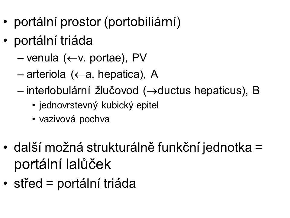 portální prostor (portobiliární) portální triáda –venula (  v. portae), PV –arteriola (  a. hepatica), A –interlobulární žlučovod (  ductus hepatic