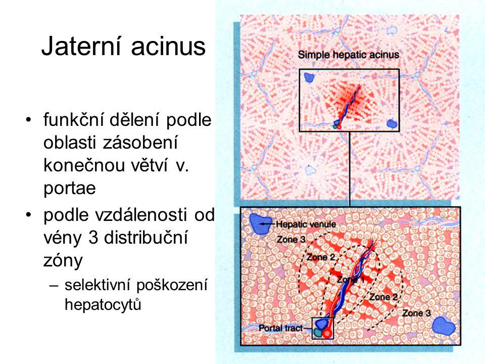 Jaterní acinus funkční dělení podle oblasti zásobení konečnou větví v. portae podle vzdálenosti od vény 3 distribuční zóny –selektivní poškození hepat