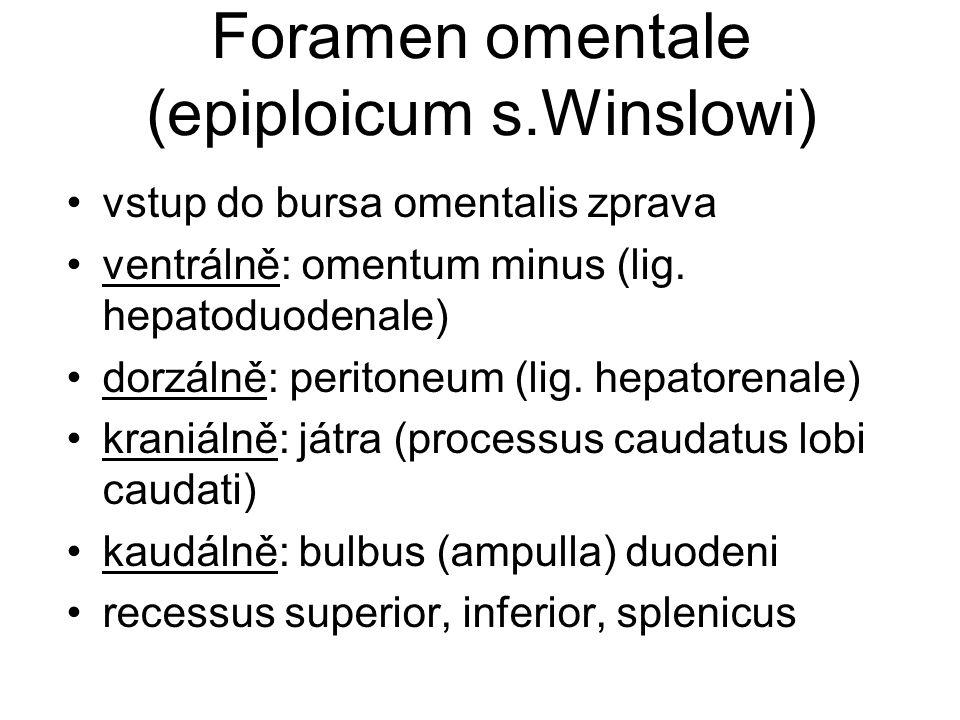Foramen omentale (epiploicum s.Winslowi) vstup do bursa omentalis zprava ventrálně: omentum minus (lig. hepatoduodenale) dorzálně: peritoneum (lig. he