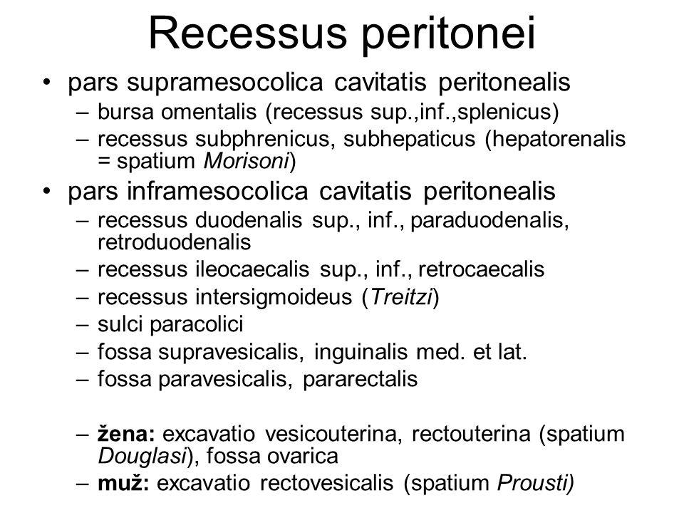 Recessus peritonei pars supramesocolica cavitatis peritonealis –bursa omentalis (recessus sup.,inf.,splenicus) –recessus subphrenicus, subhepaticus (h