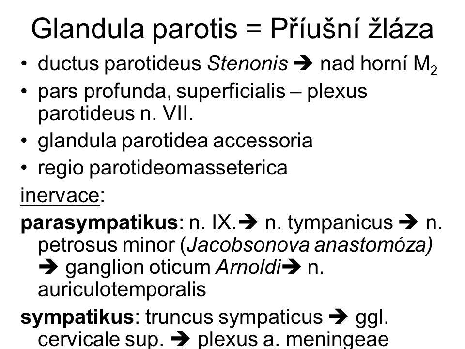 Glandula parotis = Příušní žláza ductus parotideus Stenonis  nad horní M 2 pars profunda, superficialis – plexus parotideus n. VII. glandula parotide