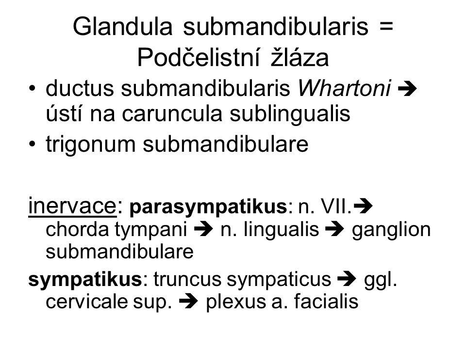 Glandula submandibularis = Podčelistní žláza ductus submandibularis Whartoni  ústí na caruncula sublingualis trigonum submandibulare inervace: parasy