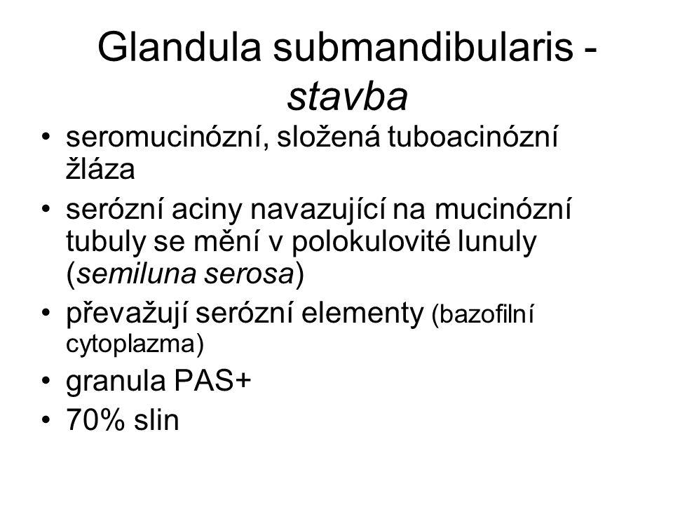 Glandula submandibularis - stavba seromucinózní, složená tuboacinózní žláza serózní aciny navazující na mucinózní tubuly se mění v polokulovité lunuly