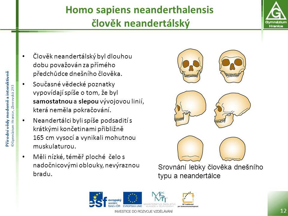 Přírodní vědy moderně a interaktivně ©Gymnázium Hranice, Zborovská 293 Homo sapiens neanderthalensis člověk neandertálský Člověk neandertálský byl dlo
