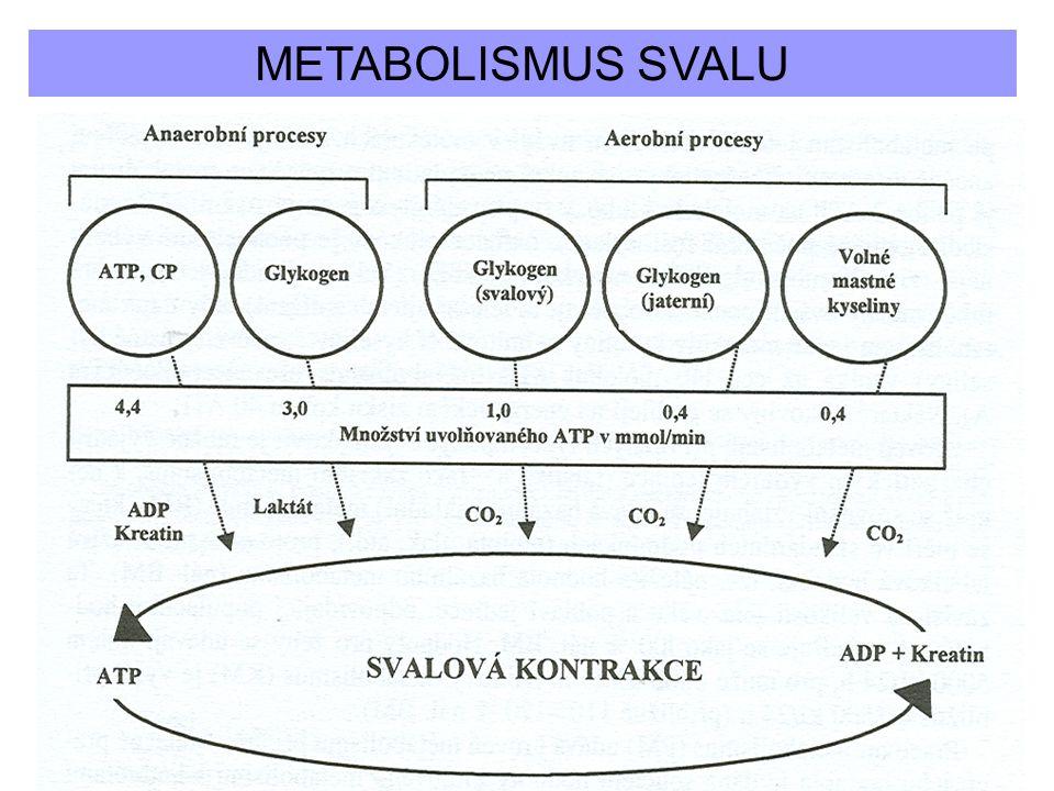METABOLISMUS SVALU