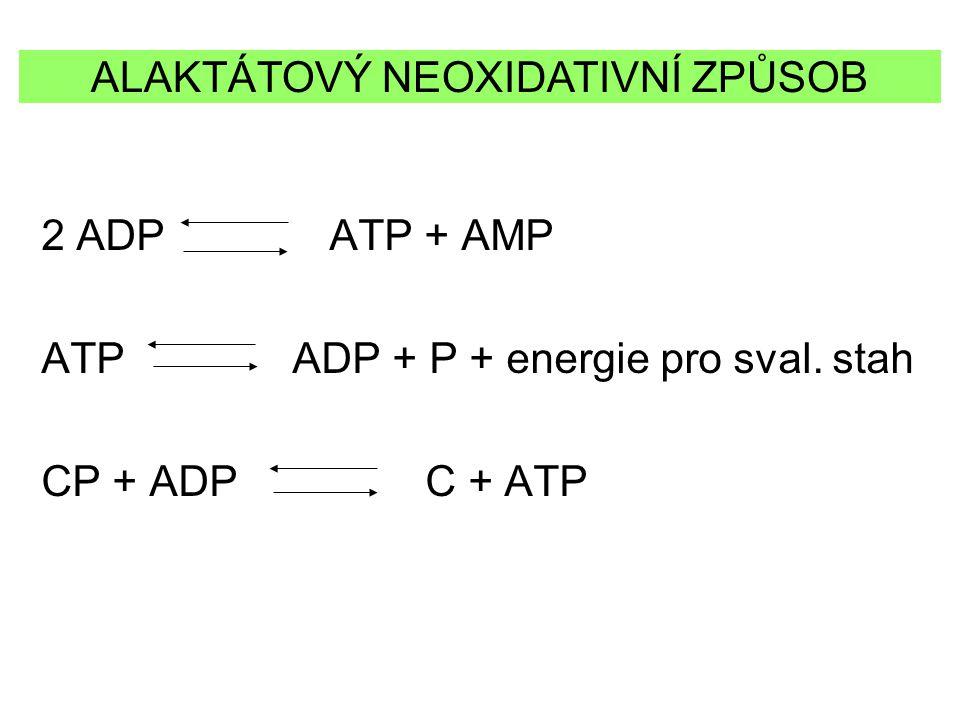 2 ADPATP + AMP ATP ADP + P + energie pro sval. stah CP + ADP C + ATP ALAKTÁTOVÝ NEOXIDATIVNÍ ZPŮSOB