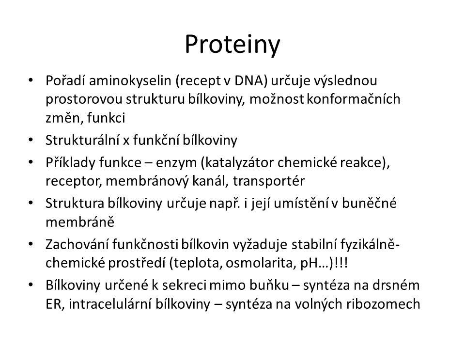 Proteiny Pořadí aminokyselin (recept v DNA) určuje výslednou prostorovou strukturu bílkoviny, možnost konformačních změn, funkci Strukturální x funkčn