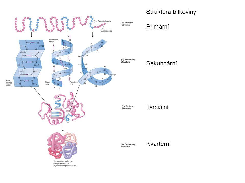 Struktura bílkoviny Primární Sekundární Terciální Kvartérní