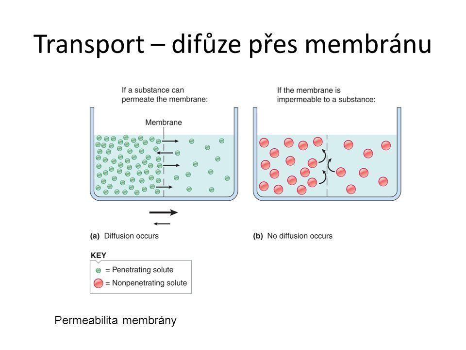 Transport – difůze přes membránu Permeabilita membrány