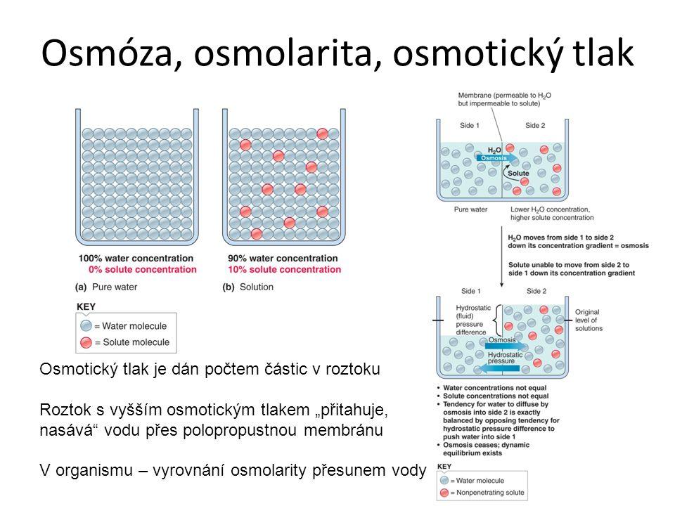 """Osmóza, osmolarita, osmotický tlak Osmotický tlak je dán počtem částic v roztoku Roztok s vyšším osmotickým tlakem """"přitahuje, nasává"""" vodu přes polop"""