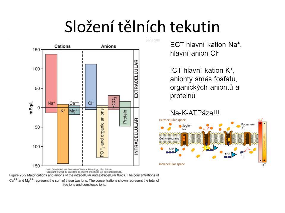 Složení tělních tekutin ECT hlavní kation Na +, hlavní anion Cl - ICT hlavní kation K +, anionty směs fosfátů, organických aniontů a proteinů Na-K-ATP