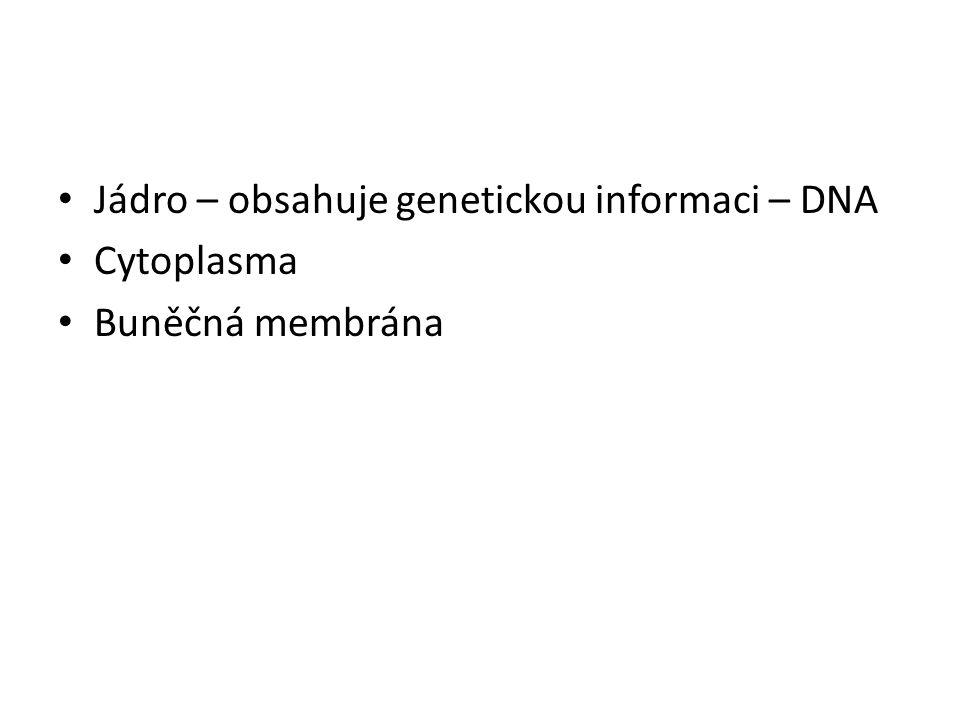Jádro – obsahuje genetickou informaci – DNA Cytoplasma Buněčná membrána
