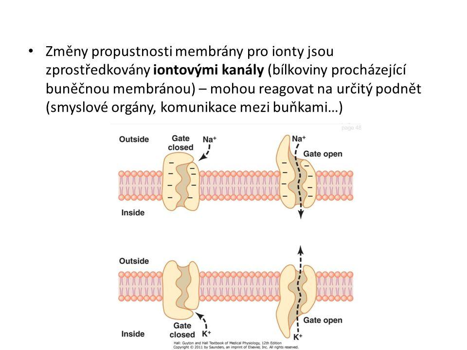 Změny propustnosti membrány pro ionty jsou zprostředkovány iontovými kanály (bílkoviny procházející buněčnou membránou) – mohou reagovat na určitý pod