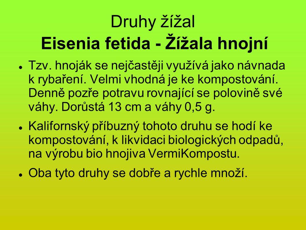 Druhy žížal Eisenia fetida - Žížala hnojní Tzv.