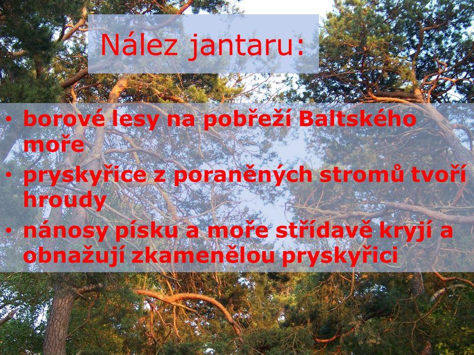 Nález jantaru: borové lesy na pobřeží Baltského moře pryskyřice z poraněných stromů tvoří hroudy nánosy písku a moře střídavě kryjí a obnažují zkamenělou pryskyřici