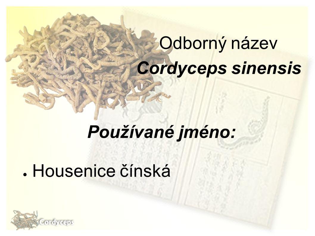 Používané jméno: ● Housenice čínská Odborný název Cordyceps sinensis