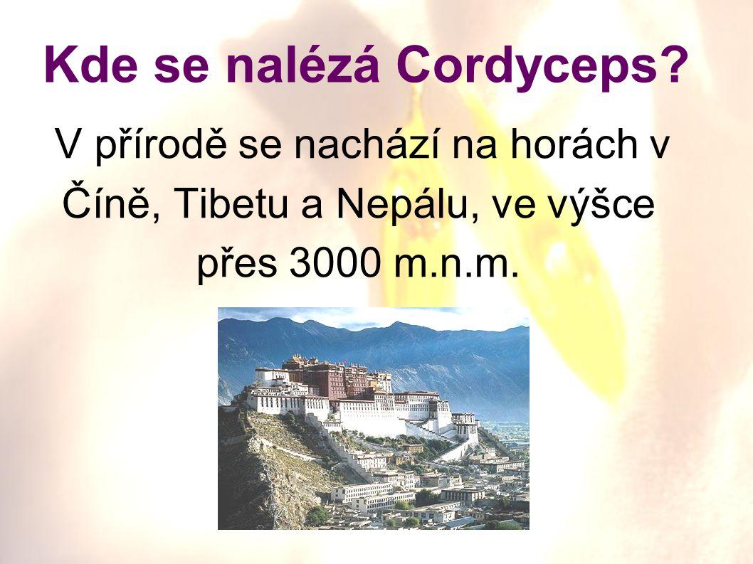 V přírodě se nachází na horách v Číně, Tibetu a Nepálu, ve výšce přes 3000 m.n.m. Kde se nalézá Cordyceps?