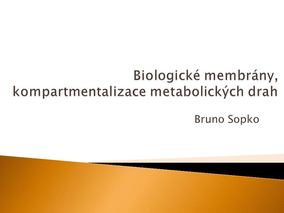 Bruno Sopko