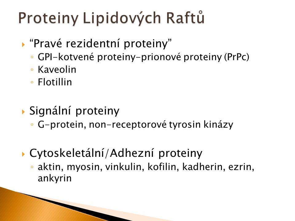 """ """"Pravé rezidentní proteiny"""" ◦ GPI-kotvené proteiny-prionové proteiny (PrPc) ◦ Kaveolin ◦ Flotillin  Signální proteiny ◦ G-protein, non-receptorové"""
