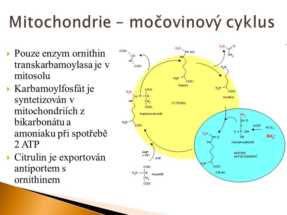  Pouze enzym ornithin transkarbamoylasa je v mitosolu  Karbamoylfosfát je syntetizován v mitochondriích z bikarbonátu a amoniaku při spotřebě 2 ATP