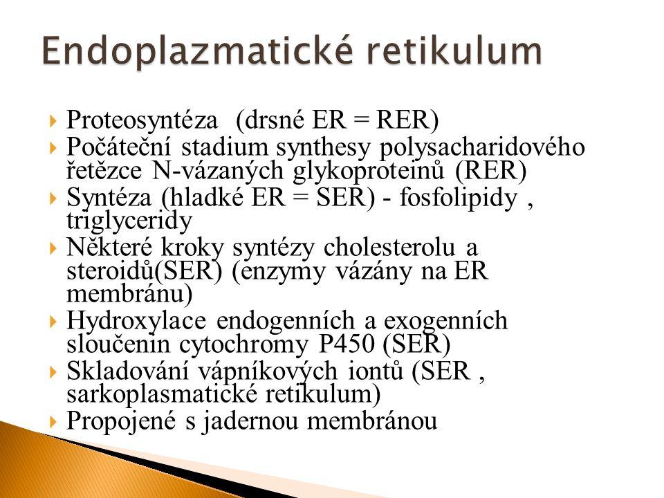  Spolupracuje s endoplasmatickým retikulem  Enzymatické postranslační modifikace bílkovin (glykosylace, sulfatace)  Syntéza nové plazmatické membrány a participace na tvorbě primárních lysosomů a peroxisomů