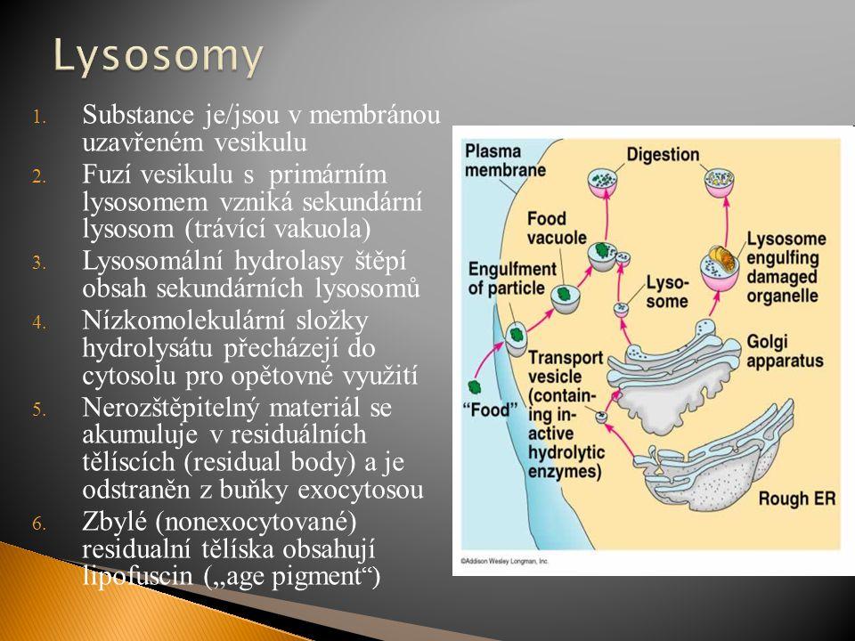 1. Substance je/jsou v membránou uzavřeném vesikulu 2. Fuzí vesikulu s primárním lysosomem vzniká sekundární lysosom (trávící vakuola) 3. Lysosomální