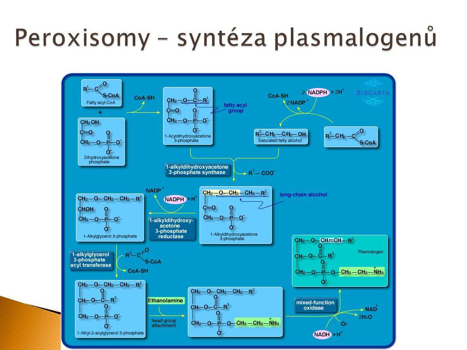  Udržuje fenotyp (morfologii) buněk a podílí se na intracelulárním transportu, buněčné motilitě a buněčném dělení  Obsahuje mikrotubuly, intermediární filamenta a aktinová filamenta (mikrofilamenta)