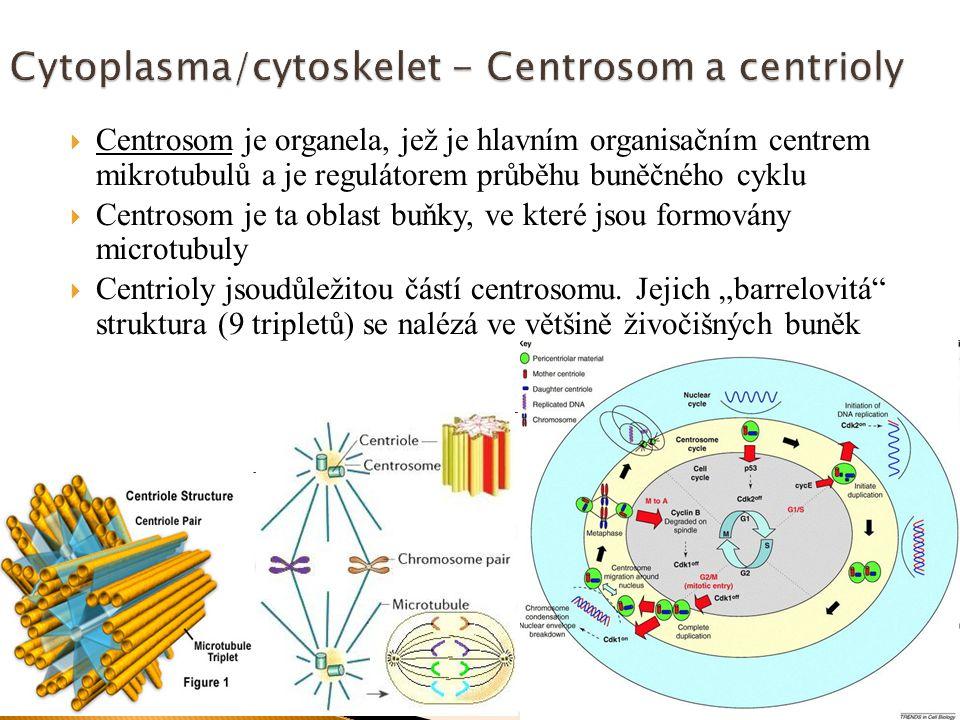  Centrosom je organela, jež je hlavním organisačním centrem mikrotubulů a je regulátorem průběhu buněčného cyklu  Centrosom je ta oblast buňky, ve k