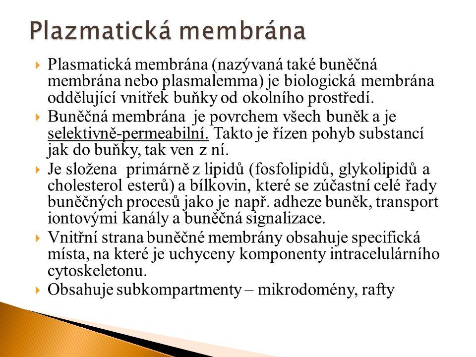  Plasmatická membrána (nazývaná také buněčná membrána nebo plasmalemma) je biologická membrána oddělující vnitřek buňky od okolního prostředí.  Buně
