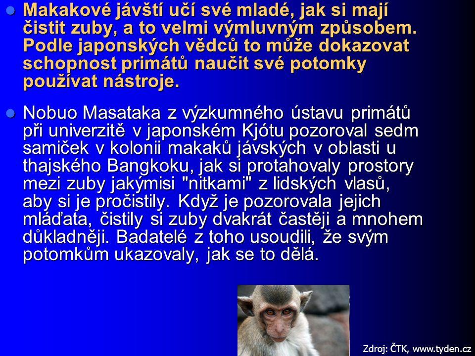 Makakové jávští učí své mladé, jak si mají čistit zuby, a to velmi výmluvným způsobem. Podle japonských vědců to může dokazovat schopnost primátů nauč