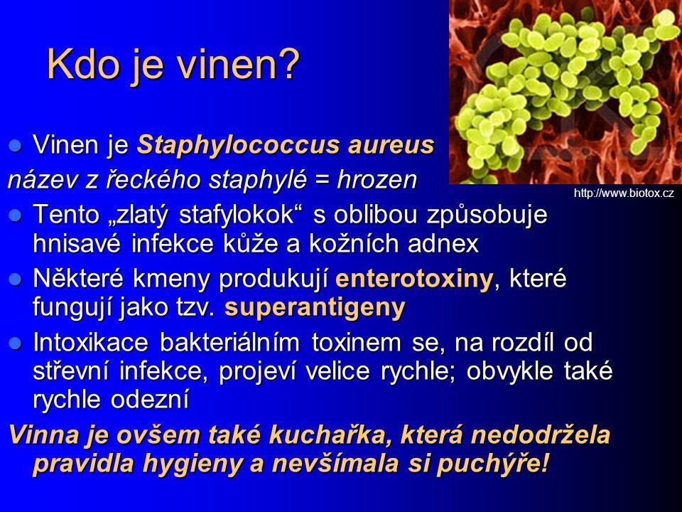 """Kdo je vinen? Vinen je Staphylococcus aureus Vinen je Staphylococcus aureus název z řeckého staphylé = hrozen Tento """"zlatý stafylokok"""" s oblibou způso"""