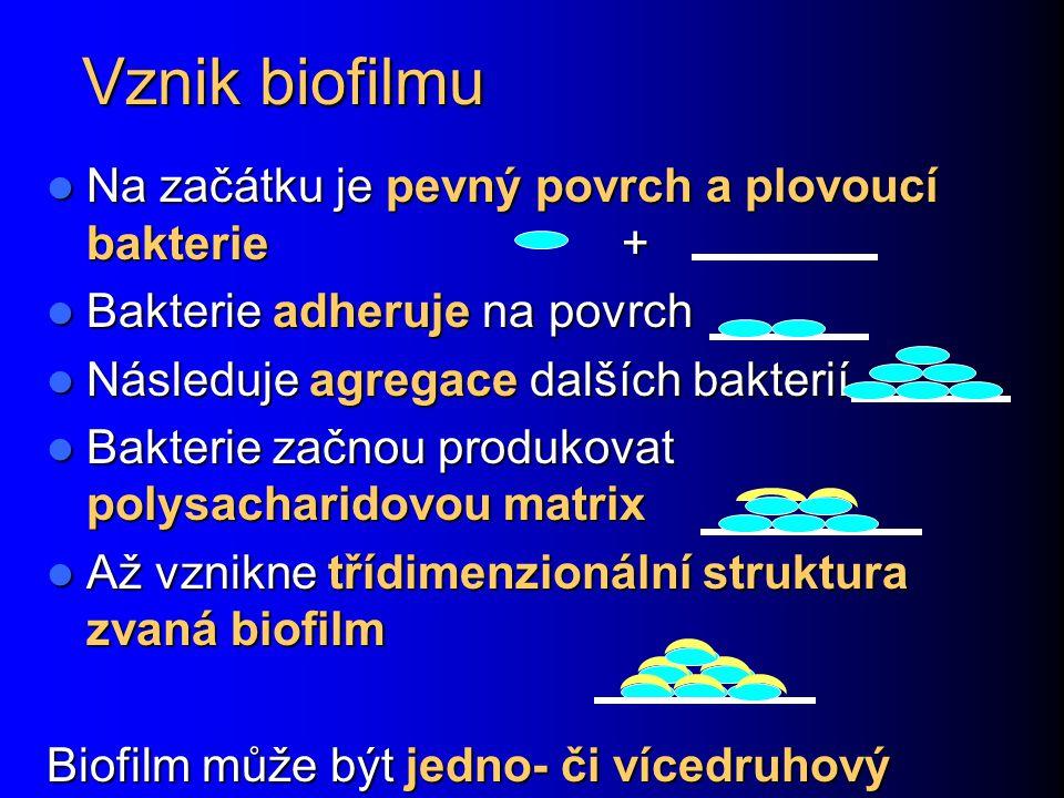 Biofilm v dutině ústní Biofilm v dutině ústní je složen z bakterií, které jsou zde přítomny normálně, nejde tedy o škodlivé bakterie.